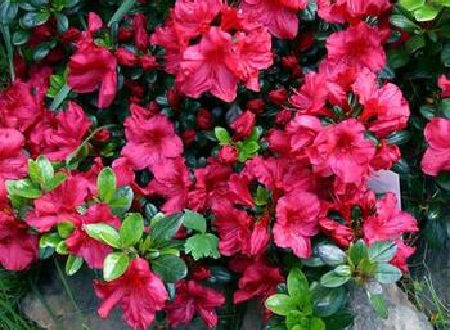 13 Most Beautiful Flowering Shrubs to Plant Now in Front of Your House