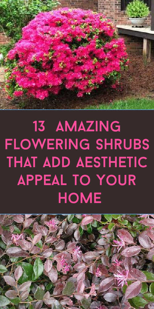 13 Amazing Flowering Shrubs that add Aesthetic Appeal to Your Home
